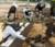Hacienda Macanao atrae turistas a un desierto con caballos y avestruces